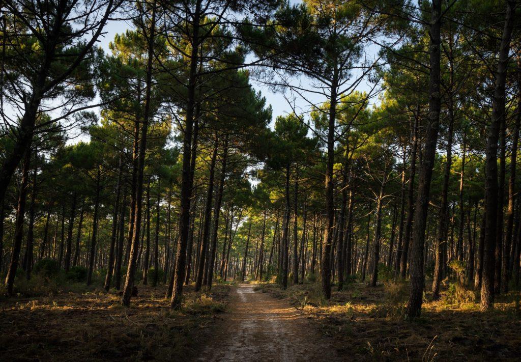 Biscarrosse forêt