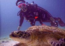 nager avec des tortues de mer