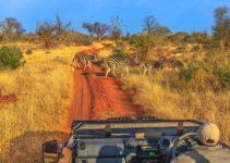 voyage-en-Afrique-du-Sud